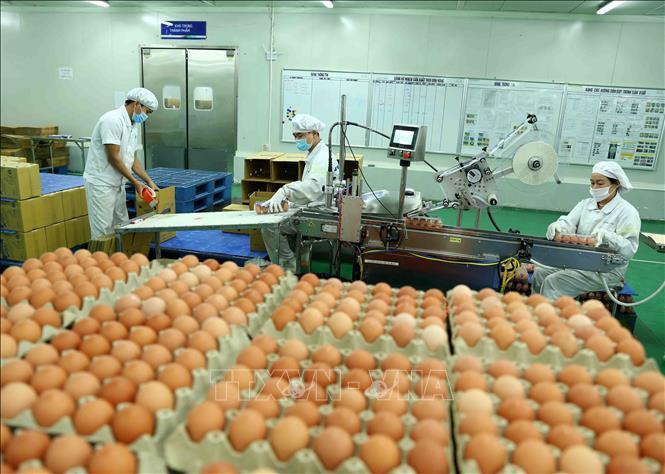 Công ty xuất khẩu lao động Thành Đô tuyển  nữ  đơn hàng Tokutei đóng gói trứng